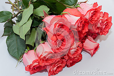 Pink roses bouquet white background