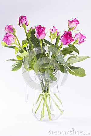 Pink roses in glass jug on white background