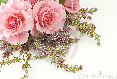 Pink Roses and Lilac White Background