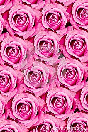 Pink roses pattern