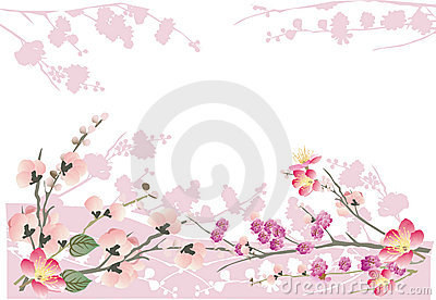 Pink sakura frame on white