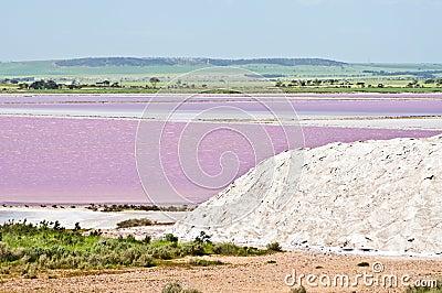 Pink salt marsh