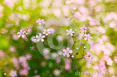 Pink, spring flowers blossoms on bokeh background
