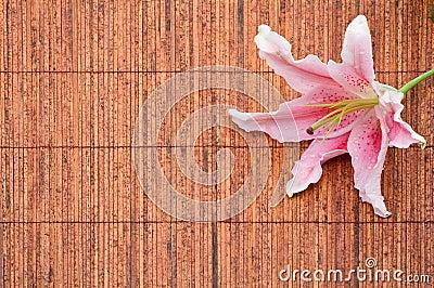 Pink stargazer lily (Lilium Stargazer) arrangement