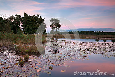 Pink sunset over lake with water lilies