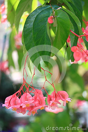 Free Pink Tropical Flower Stock Photos - 30250013