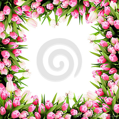 Pink tulip flowers frame Stock Photo