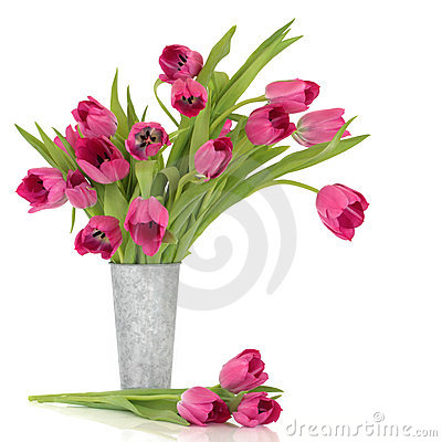 Free Pink Tulips Royalty Free Stock Photography - 17714637