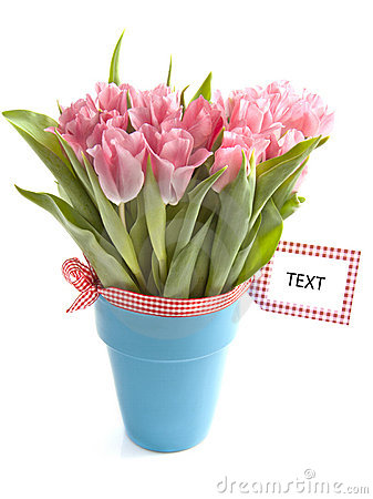 Free Pink Tulips Royalty Free Stock Photography - 18333137