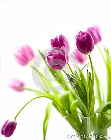 Free Pink Tulips Royalty Free Stock Image - 54857986