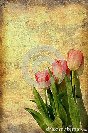 Pink Tulips Art