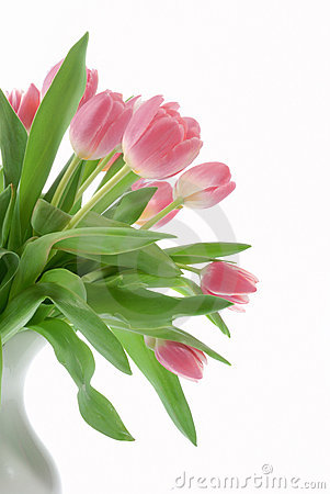 Free Pink Tulips In A White Vase Stock Photo - 4660990
