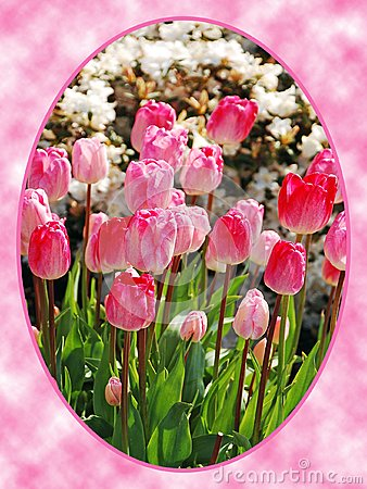 Pink tulips in oval frame