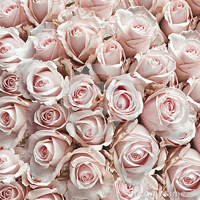Free Pink Vintage Roses Royalty Free Stock Photo - 24650235