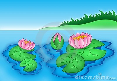 Pink water lilies 2