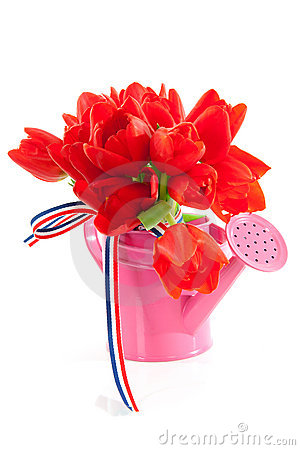 Pink watering can with red Dutch tulips