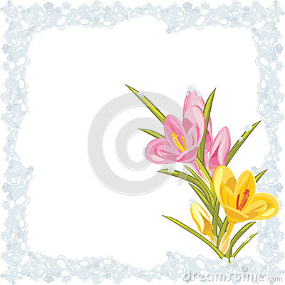 Pink and yellow crocuses in the frozen frame