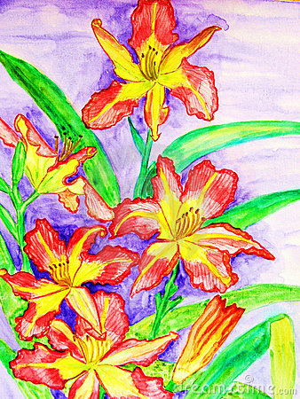 Pink-yellow daily lilies