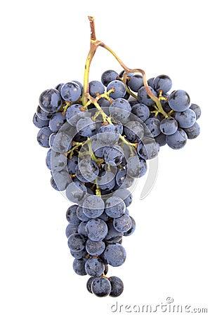 Free Pinot Noir Grapes Royalty Free Stock Photo - 285905