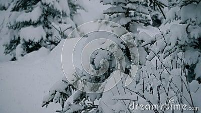 Pins de Milou dans le beau paysage d'hiver clips vidéos