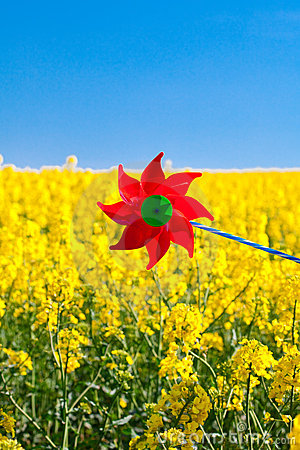 Pinwheel  in a field of yellow rape