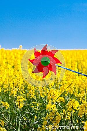 Pinwheel  in a field of yellow rape