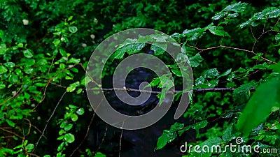 Piogge cadute sulle foglie degli alberi in un giorno nuvoloso e piovoso archivi video