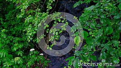 Piogge cadute sulle foglie degli alberi in un giorno nuvoloso e piovoso stock footage