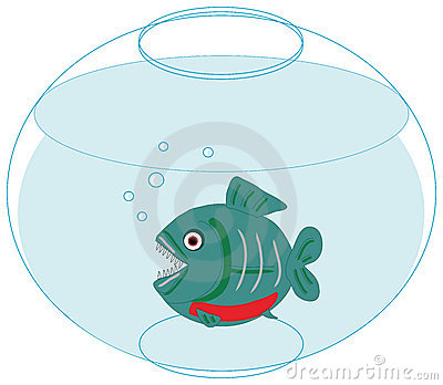 Piranha in love in a fishbowl