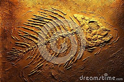 Piranha skeleton