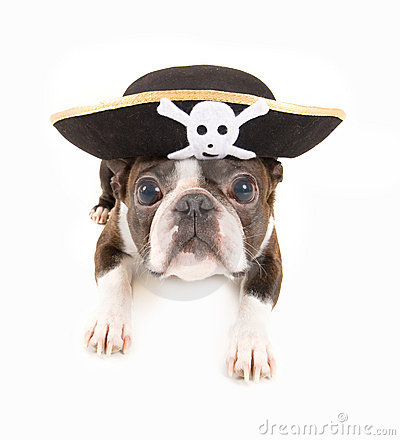 Free Pirate Dog Royalty Free Stock Image - 8433096