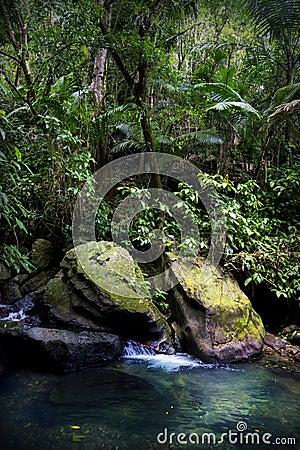 Piscina de la corriente de la selva tropical del el yunque for Piscina la selva
