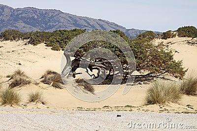 Piscinas, dune landscape, Sardinia, Italy