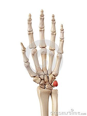 the pisiform bone stock illustration image 56651979 broken bone clipart broken bone clip art black and white