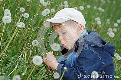 Pissenlit de soufflement de petit garçon