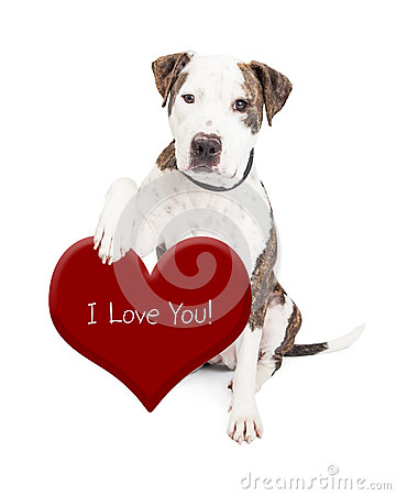 Free Pit Bull Dog Love You Heart Stock Image - 49155211