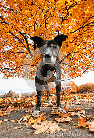 Pit bull in front of a tree