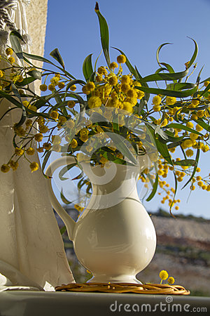 Pitcher with yellow mimosa on the window