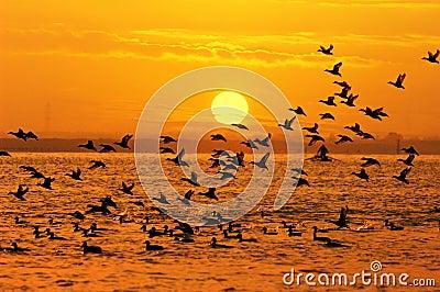 Pájaros y sol