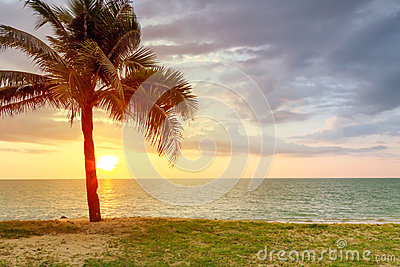 Plażowa sceneria z drzewkiem palmowym przy zmierzchem