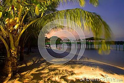 Plażowy palmowy raj