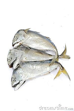 Pla Tuu , Thai mackerel