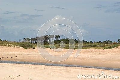 Plage avec les arbres et le flot de marée