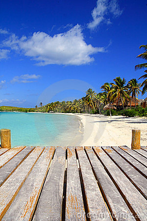 Plage des Caraïbes Mexique de treesl de paume d île de Contoy