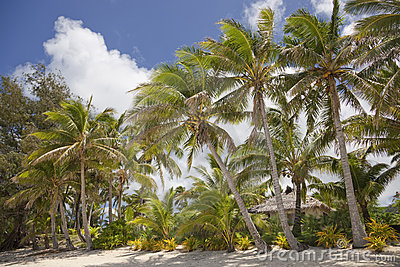 Plage tropicale avec les palmiers et la hutte