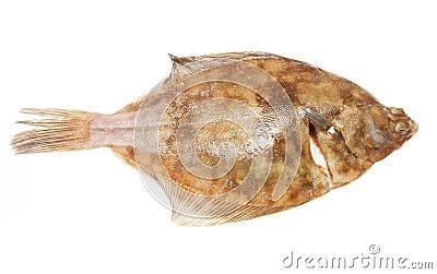 Plaice flat fish