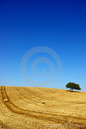 Free Plain Of The Alentejo Royalty Free Stock Images - 2665599