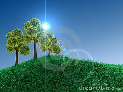 Plain sky, green-land and an exotic tree