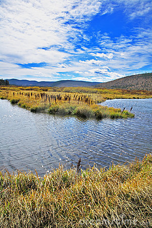 Plain, stream and yellow grass
