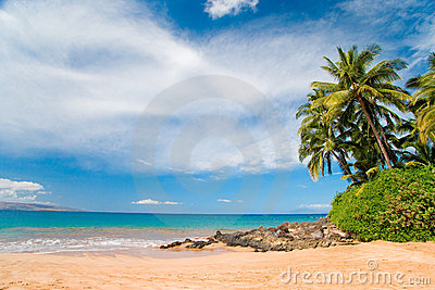 plam tree beach hawaii
